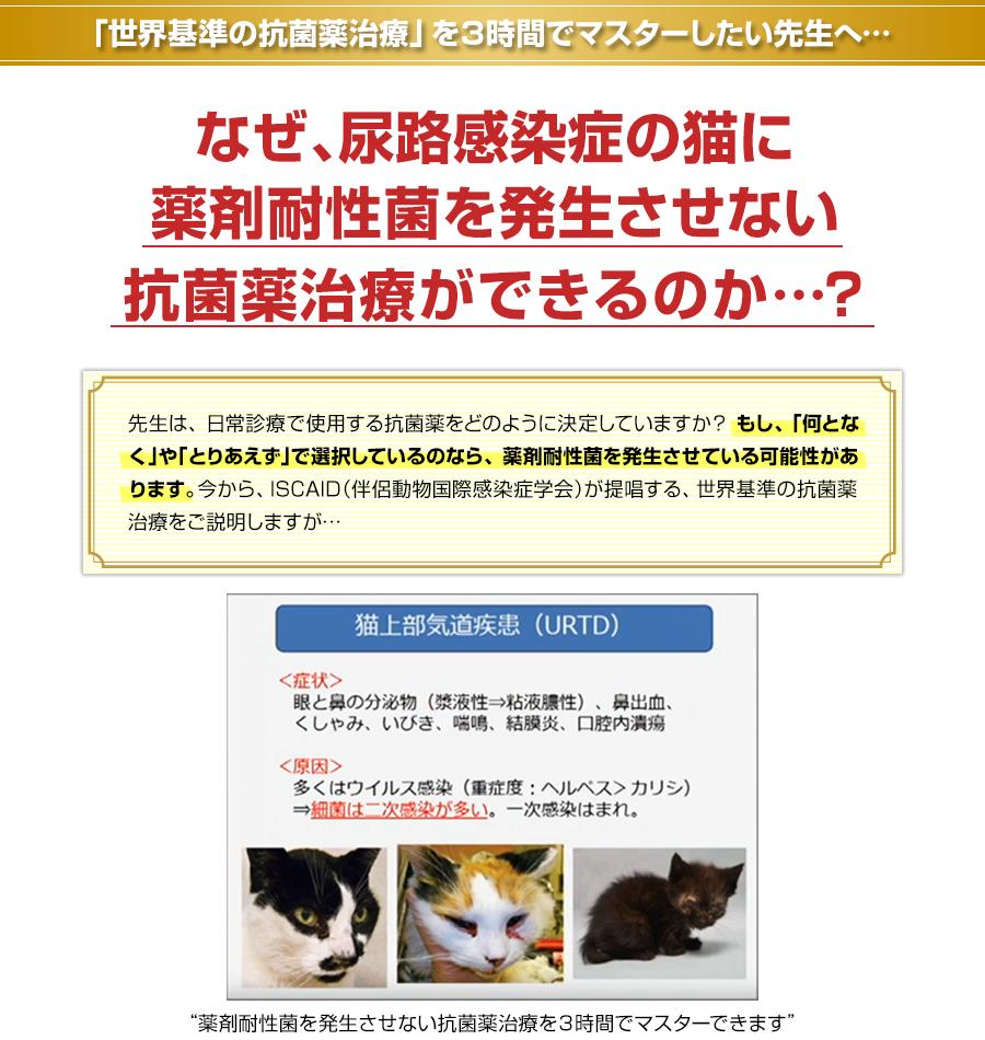 「世界基準の抗菌薬治療」を3時間でマスターしたい先生へ…先生は、尿路感染症の猫に薬剤耐性菌を発生させない抗菌薬治療ができますか…?先生は、日常診療で使用する抗菌薬をどのように決定していますか? もし、「何となく」や「とりあえず」で選択しているのなら、薬剤耐性菌を発生させている可能性があります。今から、ISCAID(伴侶動物国際感染症学会)が提唱する、世界基準の抗菌薬治療をご説明しますが…