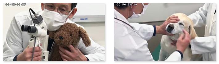 ホームドクターが知っておくべき眼科診療のポイントがわかりやすく学べます