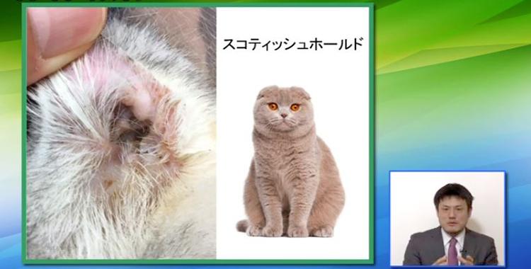 """""""猫の品種と、品種好発性疾患についてわかりやすく学べます"""