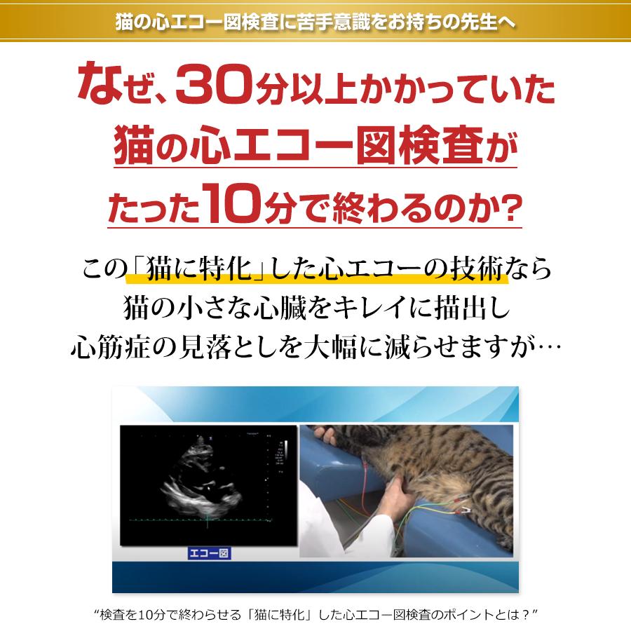 猫の心エコー図検査に苦手意識をお持ちの先生へ なぜ、30分以上かかっていた猫の心エコー図検査がたった10分で終わるのか?この「猫に特化」した心エコーの技術なら猫の小さな心臓をキレイに描出し心筋症の見落としを大幅に減らせますが…
