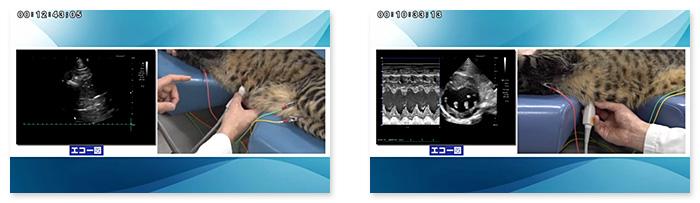 猫に特化した心エコー図検査のテクニックがわかりやすく学べます