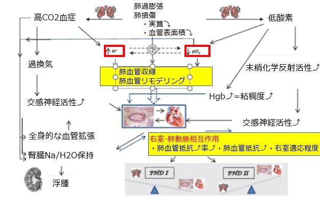 【原著論文】 Pulmonary Circulation. 2013; pp.  5-19