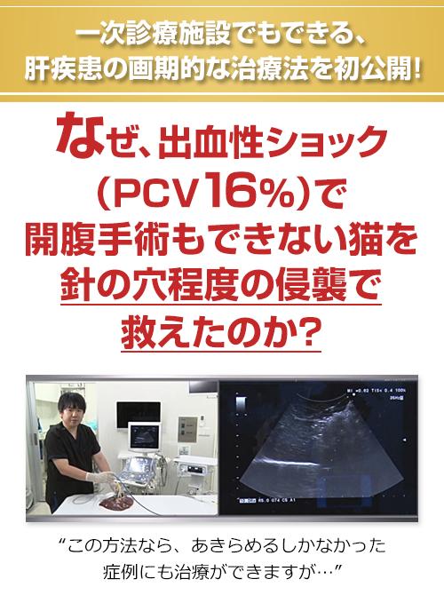一次診療施設でもできる、肝疾患の画期的な治療法を初公開!なぜ、出血性ショック(PCV16%)で開腹手術もできない猫を針の穴程度の侵襲で救えたのか?この方法なら、あきらめるしかなかった症例にも治療ができますが…
