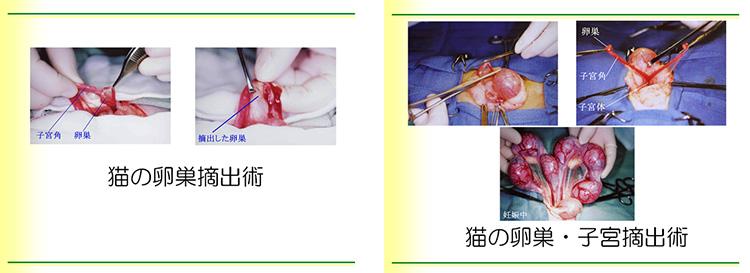 不妊手術、避妊処置、去勢手術の基礎から、飼い主さんを安心させるための大事なポイントまで、わかりやすく学べます