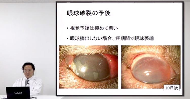 急性眼科疾患の動物への適切な診断と治療法が学べます