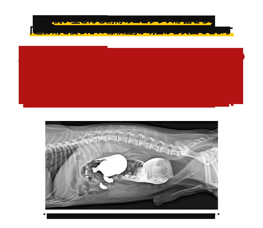 飼い主さんも納得のエビデンスが出せる「造影剤を使ったX線検査」が明日から実践できますなぜ、この方法は、エコー検査や内視鏡検査でも見つからない異常を簡単に発見できるのか?