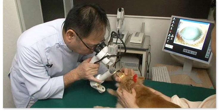 日本獣医臨床眼科研究会の副会長を務める「Dr.西」が、すぐに使える犬、猫における検査、診断法を実演形式でわかりやすく解説!