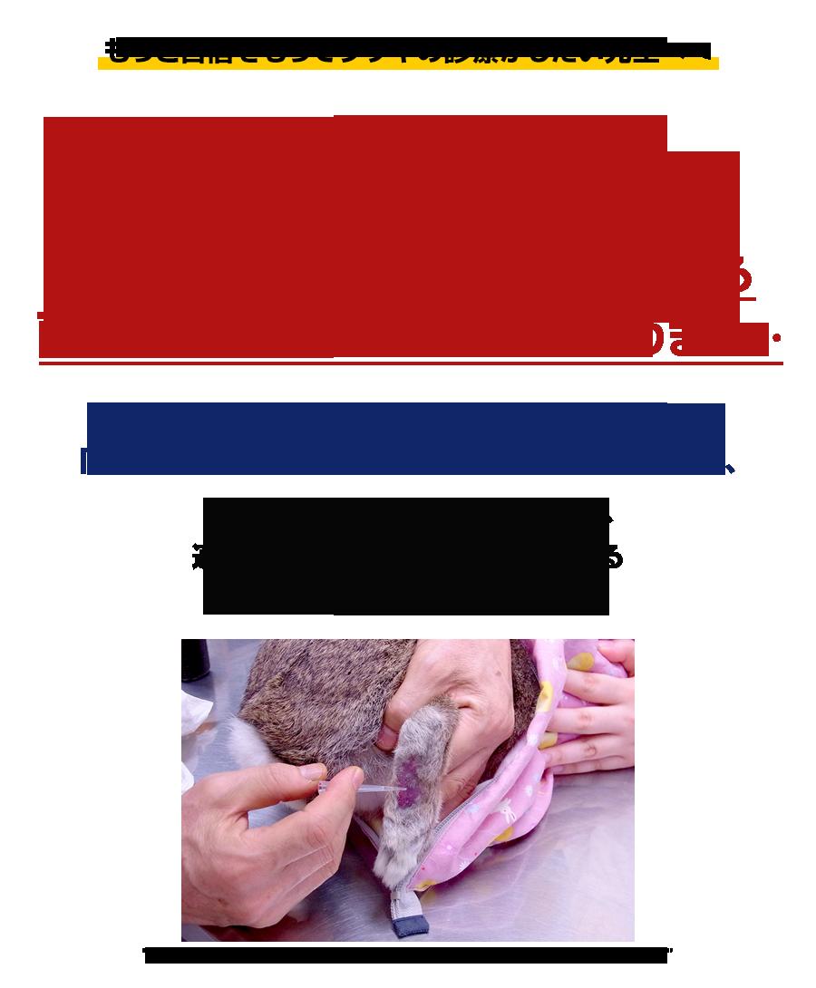 ウサギ診療の手順がひと目で分かる!フローチャート診療 なぜ、この診断治療テクニックはウサギを診るのが苦手な先生でも自信をもって診療できるようになるのか?