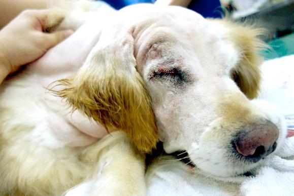 犬の創傷症例