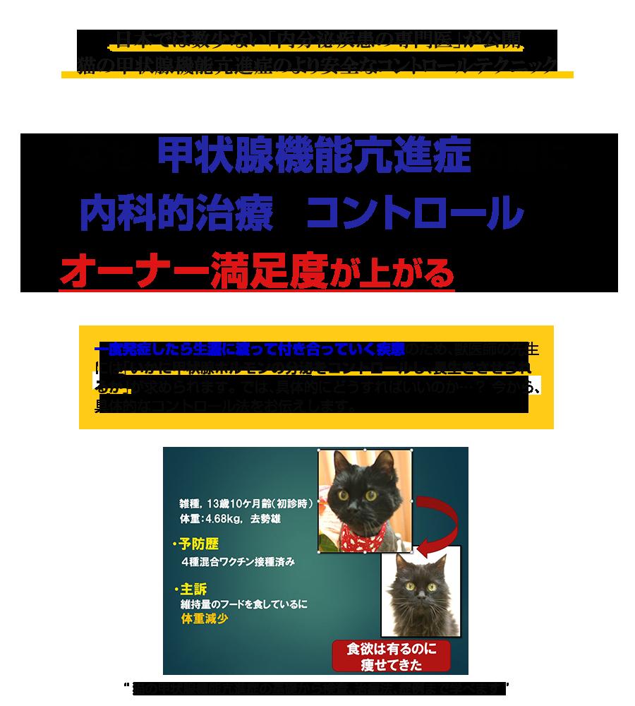 なぜ、甲状腺機能亢進症の猫にすぐに内服薬治療をするのは危険なのか…?