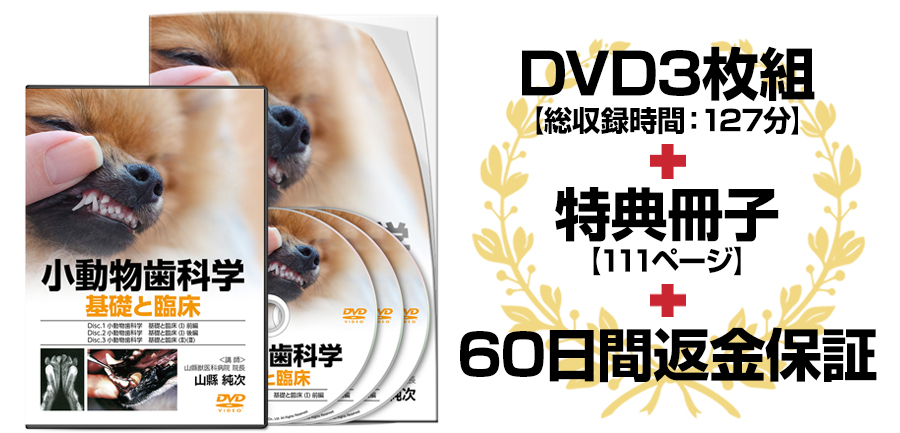 小動物歯科学 基礎と臨床DVD