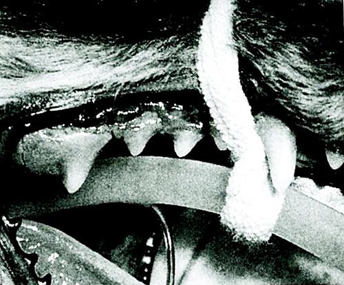 歯周病が与える動物の体への影響をわかりやすくご説明します